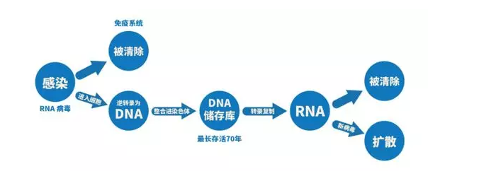 HIV病毒感染人体生成机制图