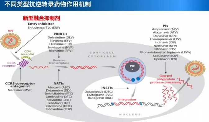 不同类型抗逆转录药物作用机制