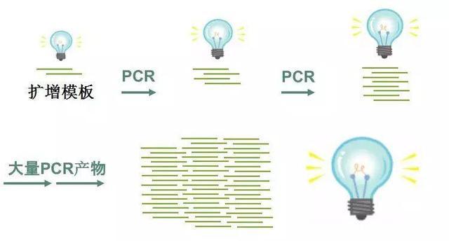 图1 PCR过程中荧光信号的积累