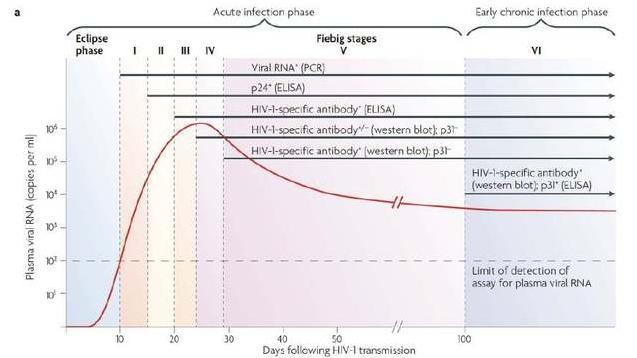 从HIV感染人体,到血液中可以查到HIV RNA 、HIV DNA、抗原、抗体等感染证据的时间是不同的
