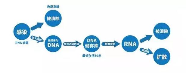 阻断药如何能达到阻断的目的,实际上跟HIV病毒感染人体的过程有关。