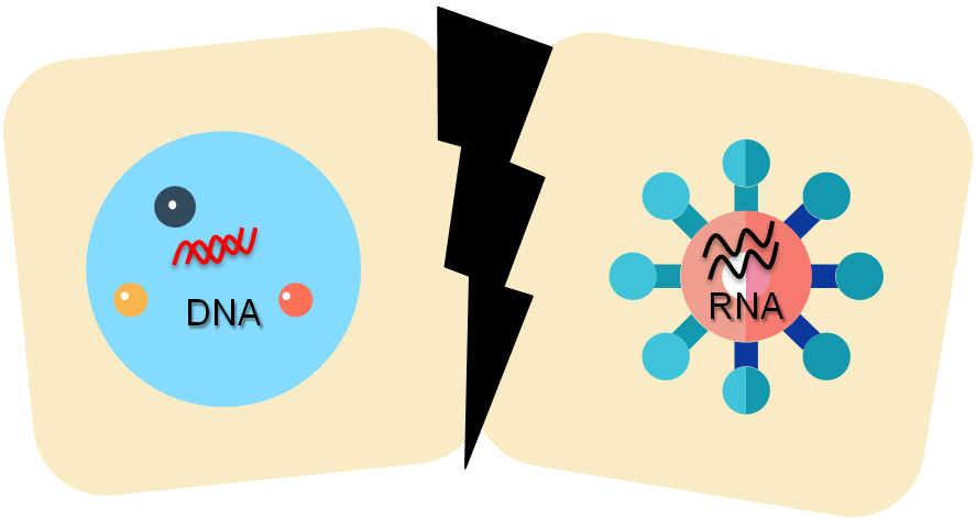 越早开始治疗,DNA越容易被控制在较低水平的范围内,越有利于HIV DNA的最终清除,越接近艾滋的功能性治愈目标。