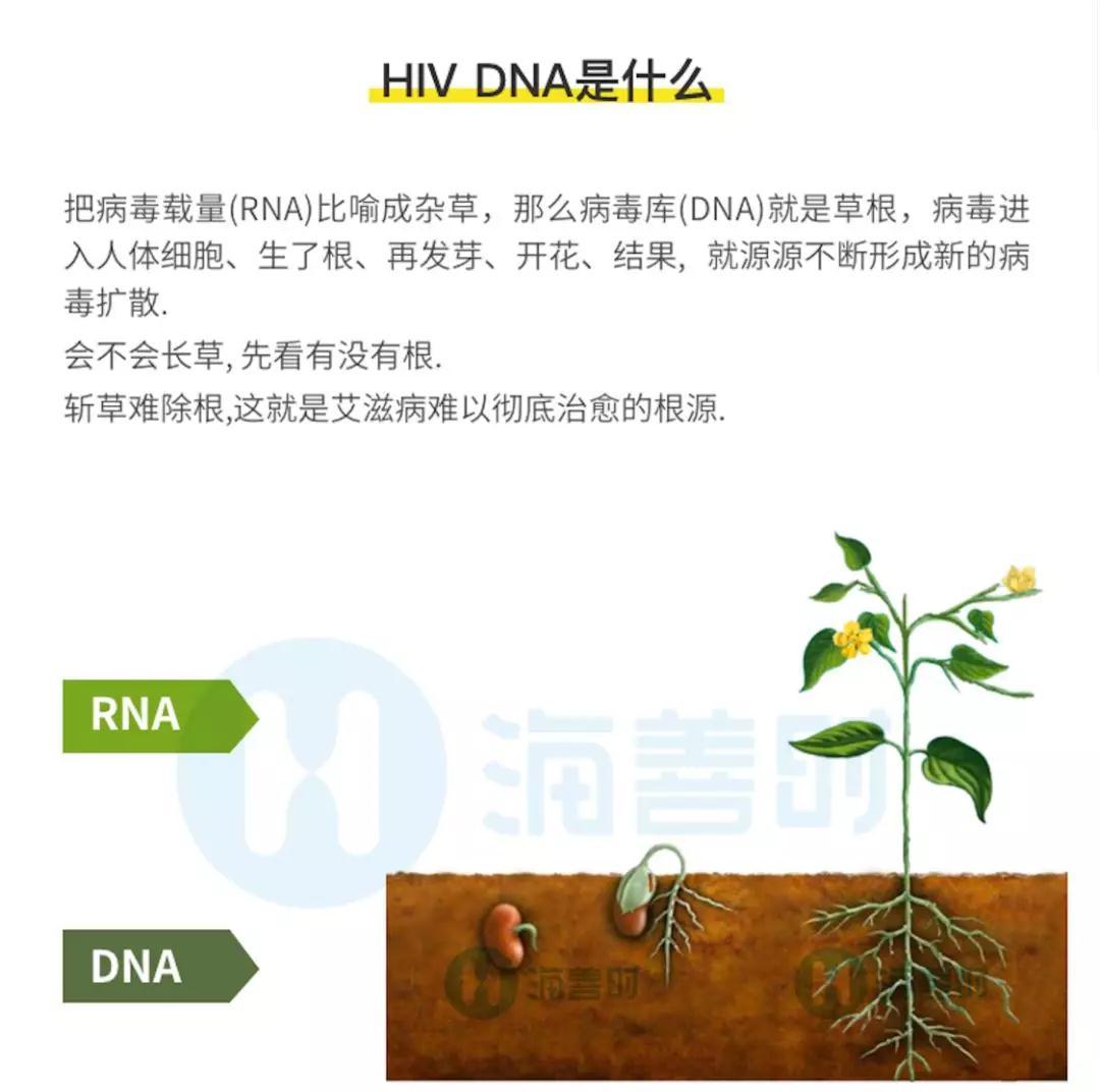 HIV DNA是什么