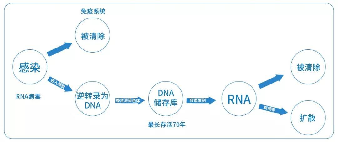 HIV DNA一旦形成可源源不断的产生HIV病毒