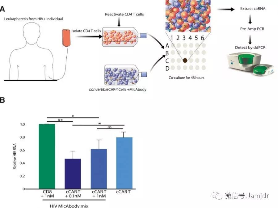 cCAR-T对长期接受HAART治疗的感染者血液中再活化细胞的杀伤作用
