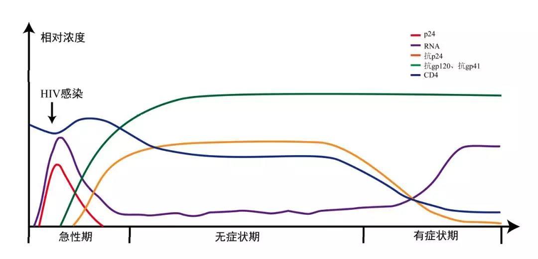 图 1 标志物及其动态变化示意图