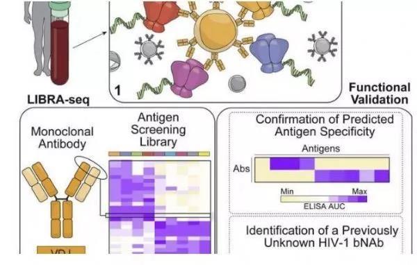 04 新型工具有望加速抗体识别和疫苗开发研究,或能使HIV等多种疾病获益