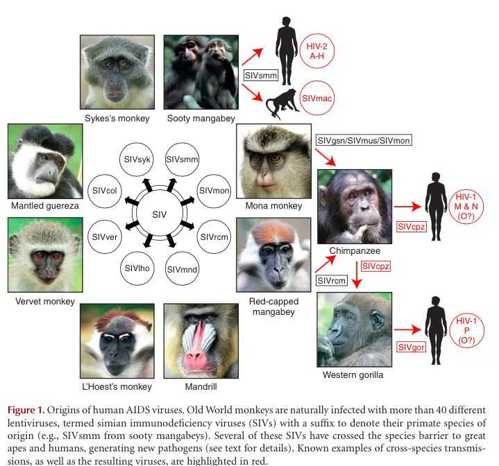 动物源性的病毒性疾病